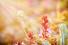 De purpere bloemen bloeien in weide Stock Foto