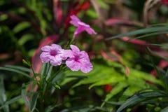 De purpere bloemen gaden binnen, aardachtergrond of behang Royalty-vrije Stock Afbeeldingen