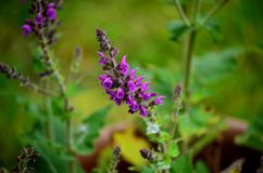 De purpere bloemen sluiten omhoog Stock Foto's