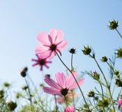 De purpere bloemen van de bloesem royalty-vrije stock afbeeldingen