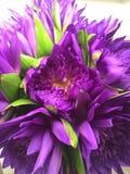 De purpere Bloemen van Lotus Stock Foto's