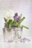 De purpere hyacint met een wijnoogst ziet eruit Stock Fotografie