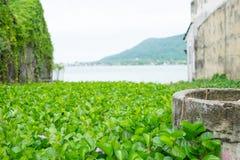 De purpere hyacinten worden omringd door groene bladerenachtergrond Stock Afbeeldingen
