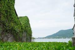 De purpere hyacinten worden omringd door groene bladerenachtergrond Royalty-vrije Stock Afbeeldingen
