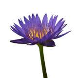 De purpere lotusbloem isoleted Stock Fotografie