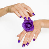 De purpere manicure en het viooltje namen toe Royalty-vrije Stock Foto's
