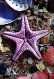 De purpere Vissen van de Ster op Shells stock fotografie