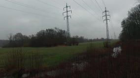 De pylonen van de elektriciteit op gerstgebied stock video