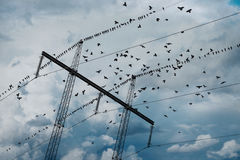 De pyloon van de elektriciteit met vogels royalty-vrije stock afbeelding