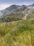 De Pyreneeën in Juli Stock Afbeeldingen