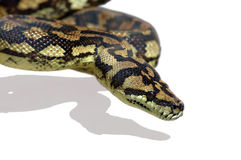 De Python van de slang Royalty-vrije Stock Afbeelding