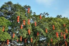 De röda lyktorna i kinesen parkerar Arkivfoton