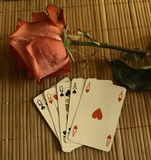 De röda rosorna i skuggan uttryck roman Morgon gryning Baikal laken Fotografering för Bildbyråer