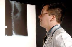 De Röntgenstraal van de kat Royalty-vrije Stock Afbeeldingen