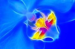 De Röntgenstraal van de orchidee Stock Foto