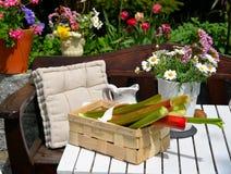 De rabarber van het tuinterras Stock Afbeeldingen