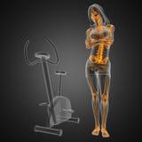 De radiografieaftasten van de vrouw in gymnastiekruimte Stock Foto's