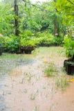 De rainning dag in de tuin Stock Fotografie