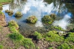 De rand van een vijver met ondiep water op natuurreservaatgebied stock afbeeldingen