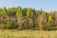 De rand van het bos in de herfst stock afbeeldingen