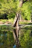 De rand van het water, Polen Royalty-vrije Stock Foto