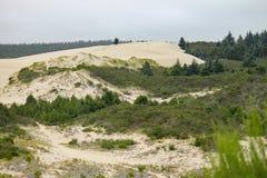 De rand van de het zandduinen van Oregon stock foto's