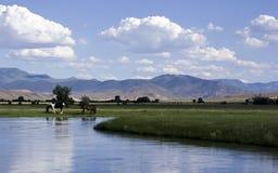 De rand van rivieren Stock Foto