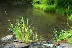 De rand van rivieren royalty-vrije stock foto