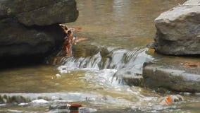 De randen van harde rots leiden tot stroomversnelling van van het de Watervallenkamp van de Brijvork het Park van de de Kreekstaa stock footage