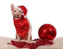 De rasechte kat kleedde zich als Santa Claus Stock Foto