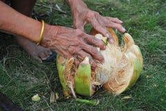 De rasp en de kokosnoot Stock Afbeeldingen