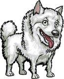 De Rassen van de hond: Amerikaanse Eskimo royalty-vrije stock fotografie