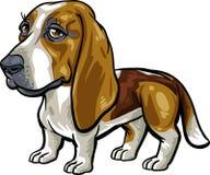 De Rassen van de hond: Basset Hond Stock Afbeelding