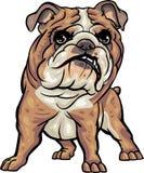 De Rassen van de hond: Buldog royalty-vrije illustratie