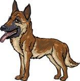 De Rassen van de hond: Duitse herder Stock Foto