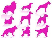 De rassensilhouet van honden Stock Foto