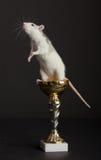 De rat is op gouden Kop Royalty-vrije Stock Afbeeldingen