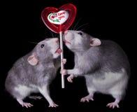 De Ratten van de valentijnskaart Royalty-vrije Stock Afbeelding