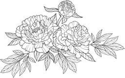De realistische grafische tatoegering van de drie pioenbloem Royalty-vrije Stock Afbeeldingen