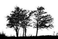 De realistische Vectorillustratie van het boomsilhouet EPS10 Stock Afbeelding