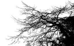 De realistische Vectorillustratie van het boomsilhouet EPS10 Royalty-vrije Stock Foto's