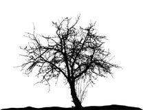 De realistische Vectorillustratie van het boomsilhouet EPS10 Royalty-vrije Stock Afbeelding
