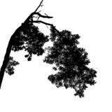 De realistische Vectorillustratie van het boomsilhouet EPS10 Stock Fotografie