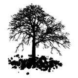 De realistische Vectorillustratie van het boomsilhouet EPS10 Royalty-vrije Stock Foto