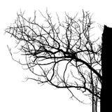 De realistische Vectorillustratie van het boomsilhouet EPS10 Stock Afbeeldingen