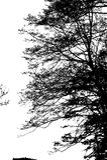 De realistische Vectorillustratie van het boomsilhouet EPS10 Royalty-vrije Stock Afbeeldingen