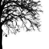 De realistische Vectorillustratie van het boomsilhouet EPS10 Stock Foto