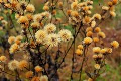 De recente Bloemen van de Dalingsweide Stock Foto