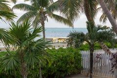 De recente dagzon giet een warme gloed over een dok in de afstand door de palmen stock afbeeldingen