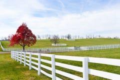 De recente Herfst bij platteland. Royalty-vrije Stock Fotografie